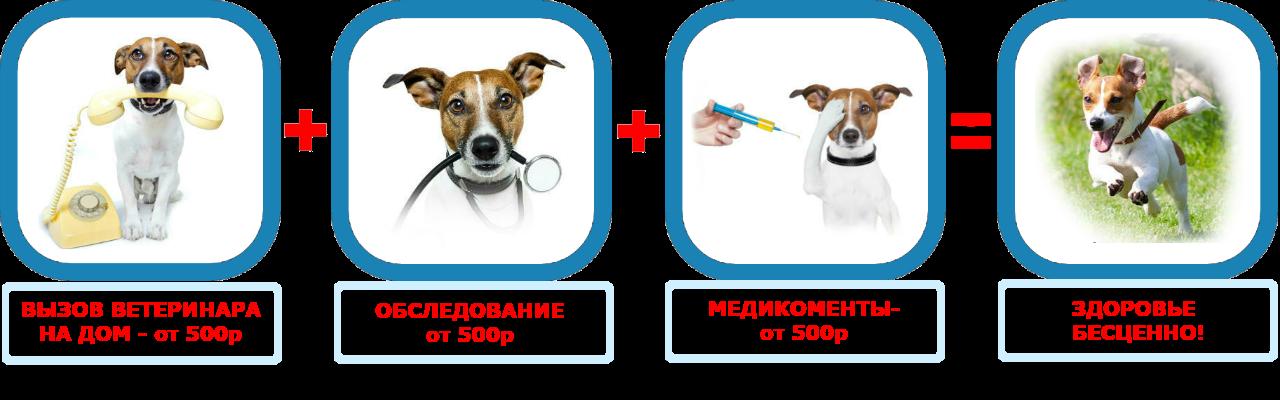 Вызов ветеринара на дом в район Мосрентген